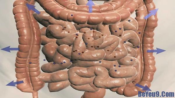 95% hàm lượng chất dẫn truyền thân kinh Serotonin được sản sinh trong hệ tiêu hóa, trong khi sản xuất tại não chỉ 5%