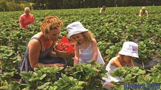 Bố mẹ cần biết một số lý do nên cho trẻ làm vườn